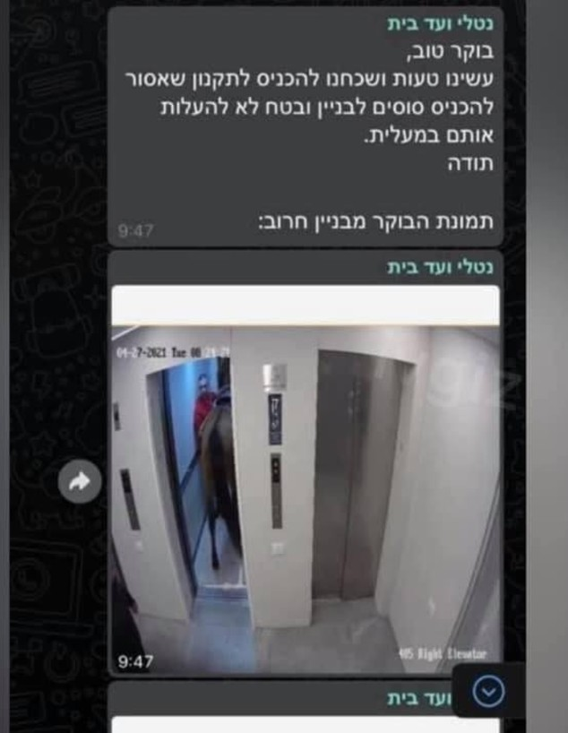סוסים נכנסו למעלית בבניין בתל אביב (צילום: צילום מסך)