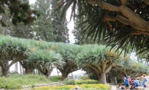 מסע ישראלי לכרמל (צילום: מסע ישראלי )