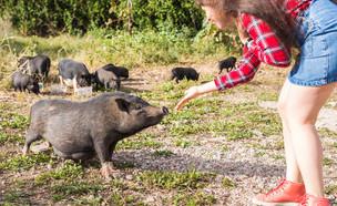 אישה וחזירי בר (צילום: shutterstock)