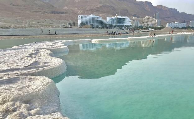פטריות ים המלח - עמית בחובר (צילום: עמית בחובר)