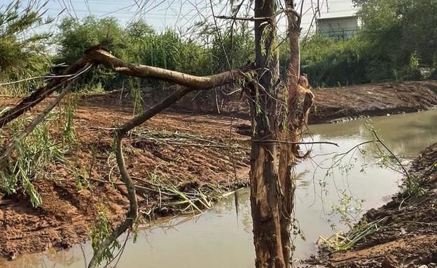 שתילת עצים באפיק החדש (צילום: ארז דגן)