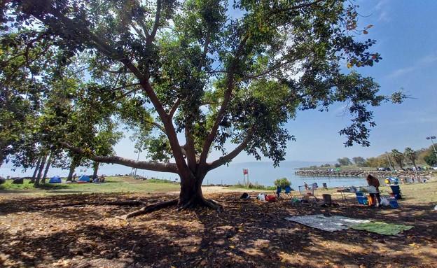 חוף מפרץ אמנון (צילום: טלי בר, איגוד ערים כנרת)