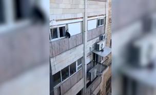 זרק חתול מקומה 4 (צילום: טיקטוק)