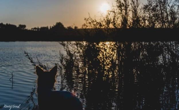 שמורת טבע נחל הבשור (צילום: אלכסי גורל)