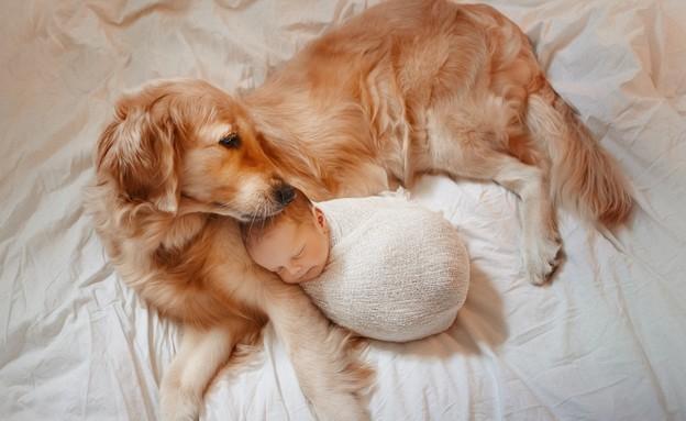 נינה הכלבה  (צילום: קרן גניש)