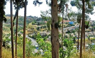 מסע ישראלי לצפת (צילום: שלומית מסיקה, מתוך אתר פיקיויקי, מסע ישראלי)