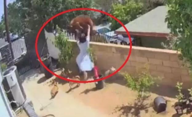 הבריחה דובה כדי להציל את הכלבים שלה (צילום: tiktok)
