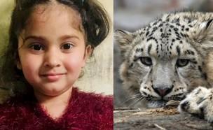 נמר טרף ילדה בת חמש (צילום: twitter, shutterstock)