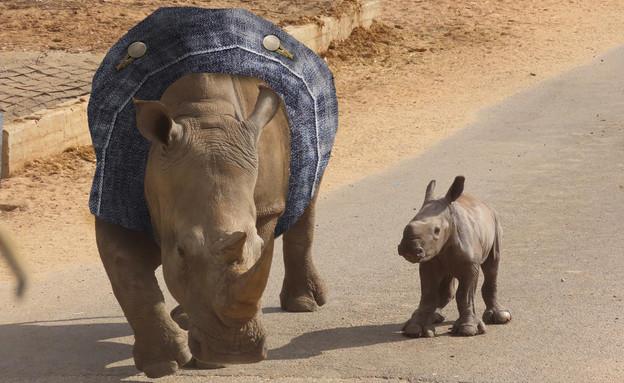 קרנפית עם ג'ינס (צילום: ספארי רמת גן)