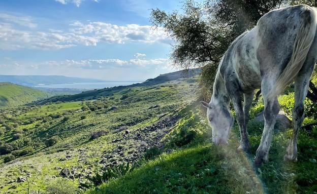 הירדן ההררי (צילום: גילה יעקובי גורביץ)