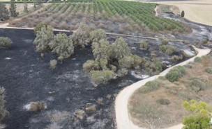 הנזק האדיר של השרפות בעוטף עזה (צילום: אמנון זיו)