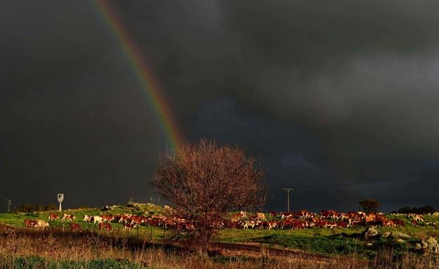 """נוף רמת הגולן (צילום: אבי אוחיון, לע""""מ)"""