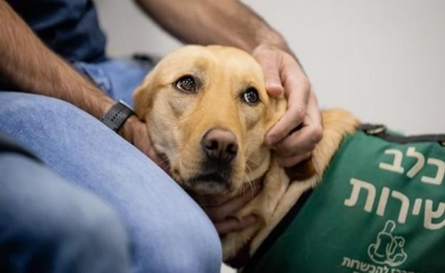 כלבי שירות להלומי קרב (צילום: המרכז להכשרת כלבי שירות)