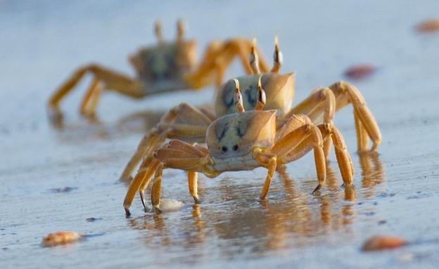 חולון החוף (צילום: גיא לויאן, רשות הטבע והגנים)