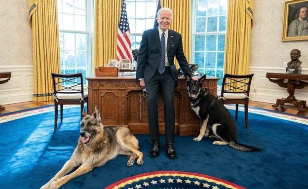 הכלבים של ביידן (צילום: הבית הלבן)