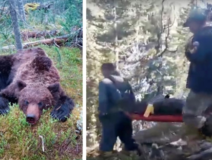 רוסיה: בן 16 נטרף על ידי דוב בזמן טיול