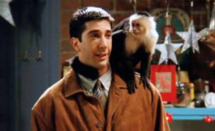"""דיוויד שווימר, מתוך """"חברים"""" (צילום: Warner Bros. Television Distribution, צילום מסך)"""
