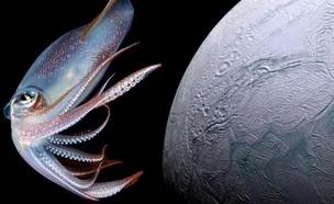 אנקלדוס (צילום: deepsea.deepspace, instagram)