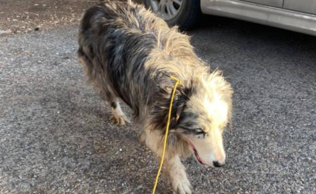 כלב נגנב (צילום: זוהר איטח)