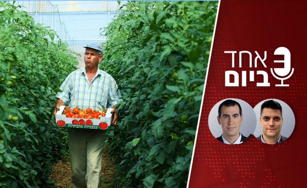 אחד ביום - רפורמה בחקלאות (צילום: פלאש 90)