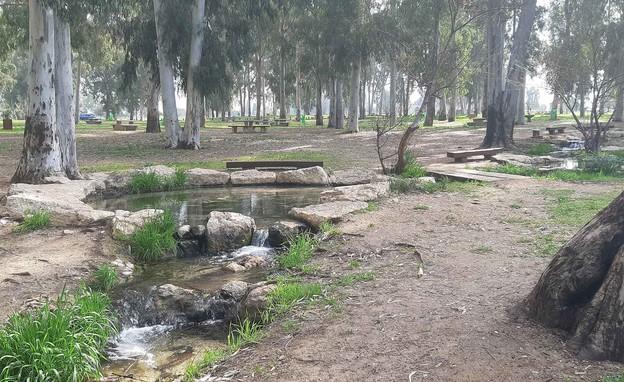 ירון תל אפק (צילום: דניאל תורגמן)