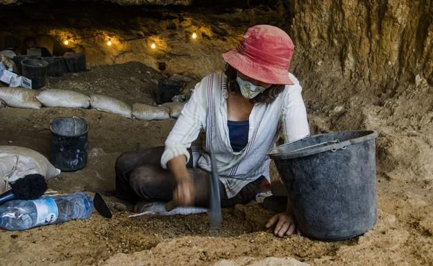 מחקר על מכרסם שחי במדבר יהודה לפני 100 אלף שנים (צילום: יולי שוורץ, רשות העתיקות)
