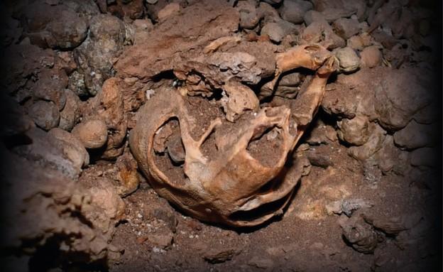 מחקר על מכרסם שחי במדבר יהודה לפני 100 אלף שנים (צילום: איגנסיו לזגבסטר)