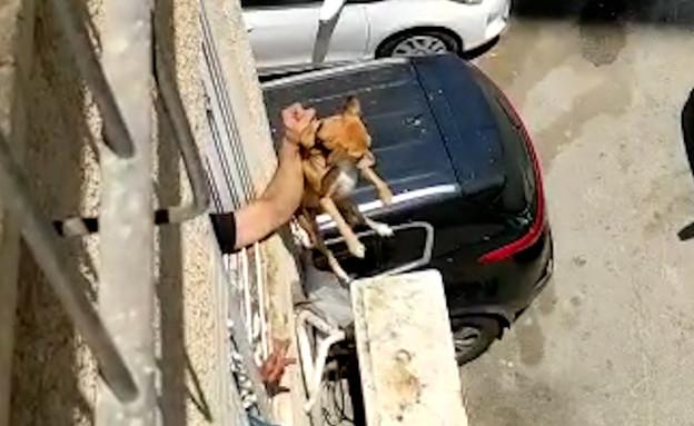 התעללות בכלב ברחובות (צילום: דוברות המשטרה)