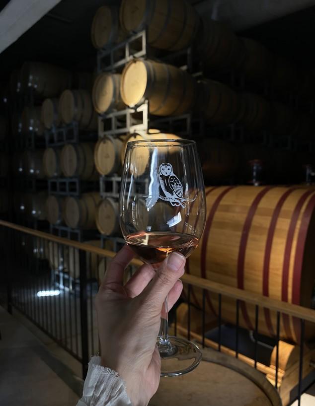 יינות יקב תבור (צילום: חיים יוסף)