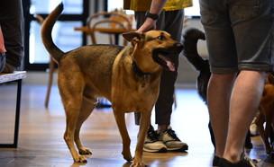 יום הכלב הבינלאומי 2021 (צילום: באדיבות סולוטו, יחסי ציבור)