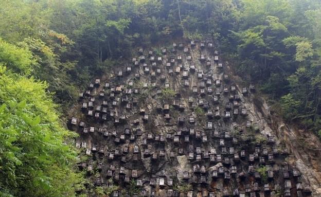 שמורת הטבע שאנגונג'יה (צילום: CGTN)