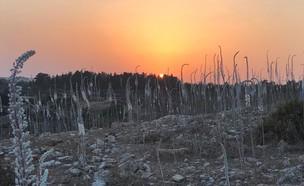 חצבים ביודפת (צילום: אורי ארליך, רשות הטבע והגנים)