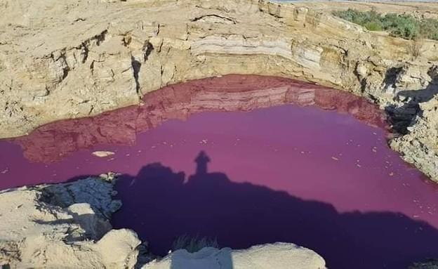 מים בים המלח בצד הירדני הפכו אדומים (צילום: סעיף 27א לחוק זכויות יוצרים)