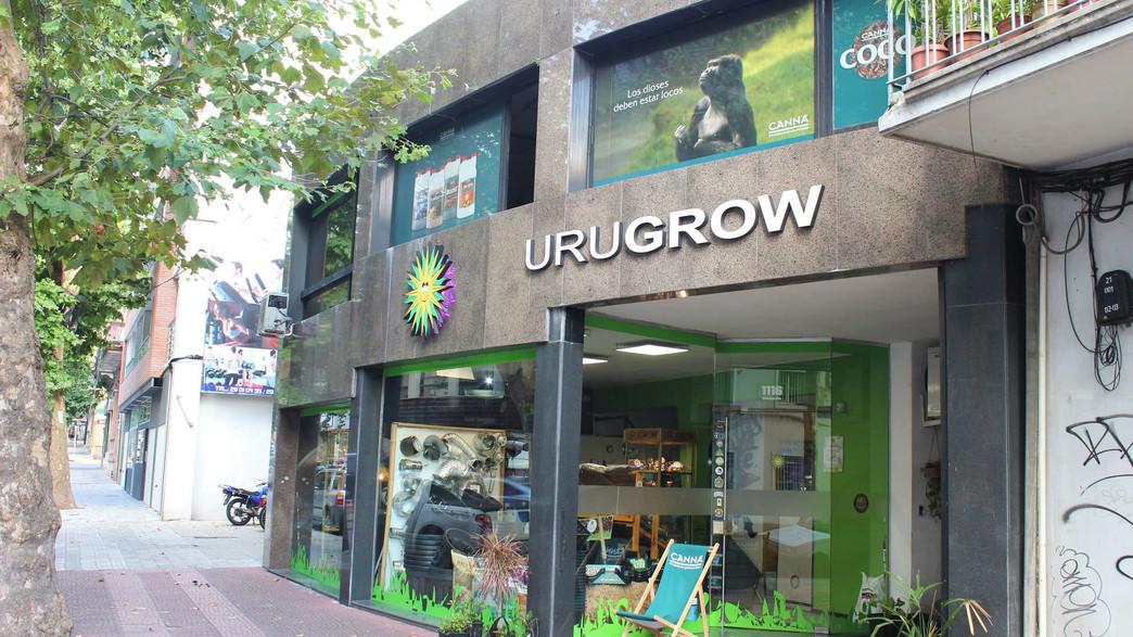 חנות קנאביס באורוגוואי (צילום: Ricardo Barata, shutterstock)