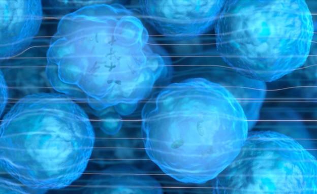 חלוקת תאים סרטניים בהשפעת אלקטרודות חשמליים (צילום: חדשות 12)