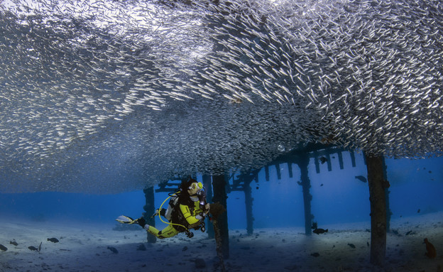 """פסטיבל צלילה בים האדום (צילום: נועם קורטלר, יח""""צ)"""