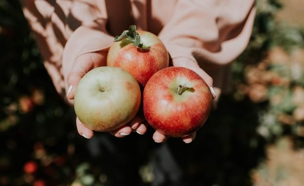 תפוח (צילום: holly mindrup)