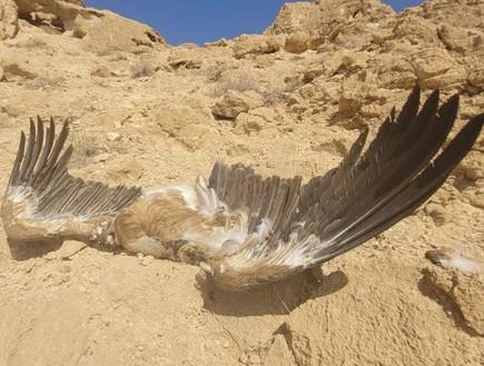 ההרעלה הגדולה ביותר: 3 נשרים נוספים נמצאו מתים